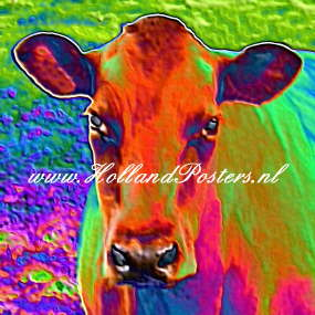 Koeien 5 - Felle kleuren ...